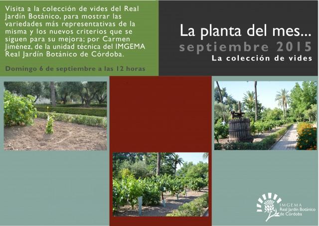 planta-del-mes-de-septiembre