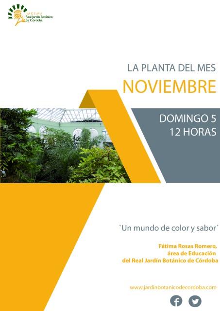 La-planta-del-mes-de-noviembre