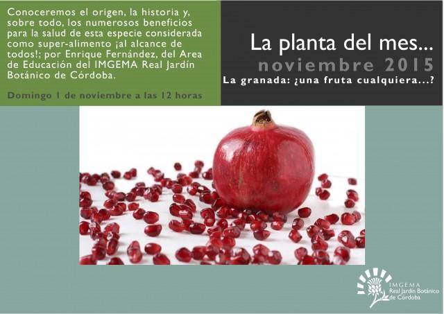 planta-del-mes-de-noviembre