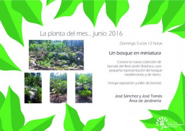 planta-del-mes-de-junio2016-01