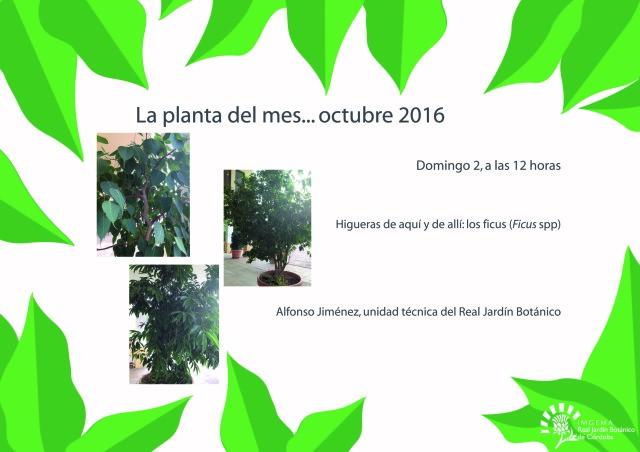 planta-del-mes-de-octubre-01