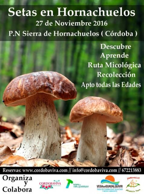 setas-en-hornachuelos-763x1024