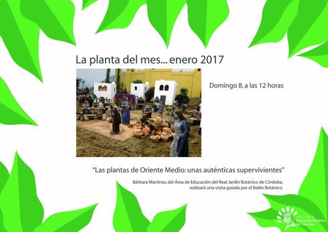 la-planta-del-mes-enero-2017