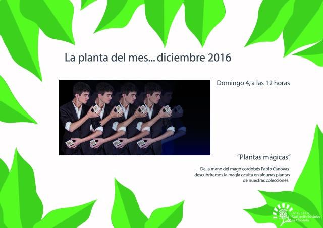 planta-del-mes-de-diciembre-01